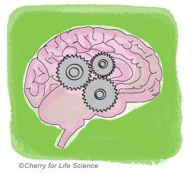 Hypothèse cognitivo-comportementale causes de la maladie bipolaire trouble bipolaire
