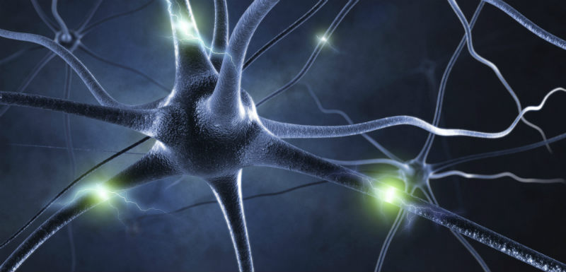 neurones_bipolaire