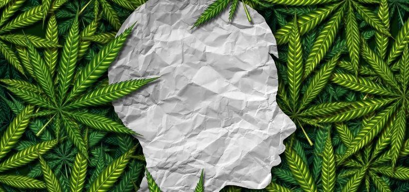 Troubles bipolaires et abus de cannabis associés au décès